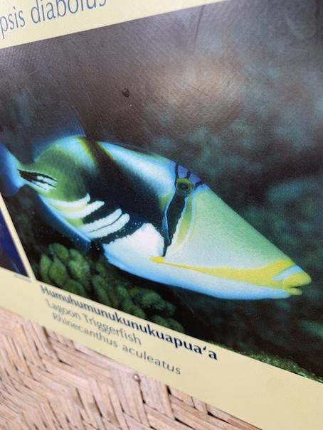 ハナウマ湾のお魚に噛まれた〜!_c0187025_13302049.jpg