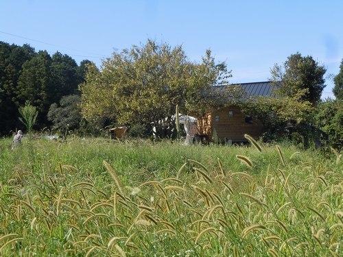 田舎家カフェで ・・・_b0102572_10485802.jpg