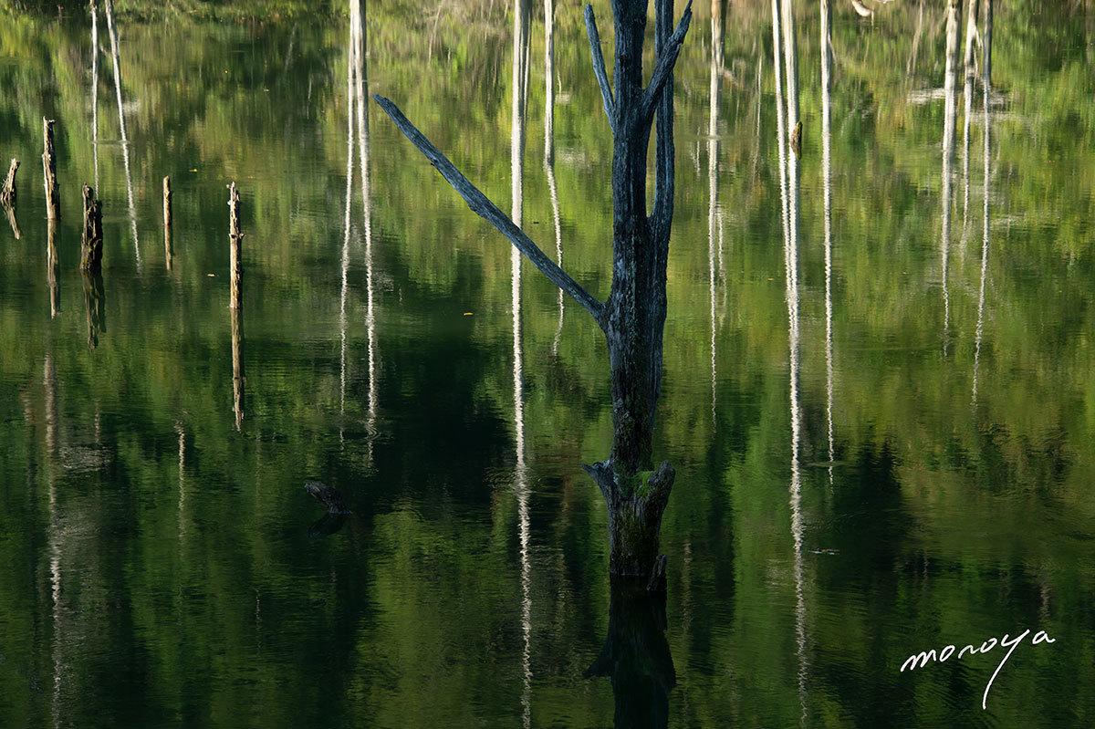 自然湖2_c0085877_11434111.jpg