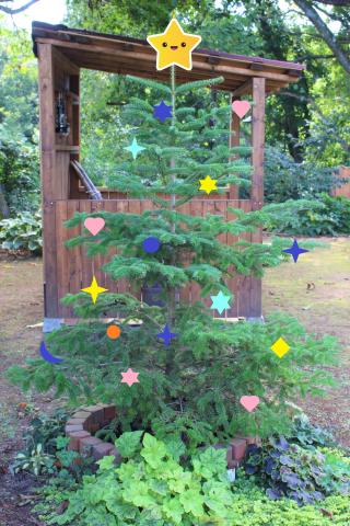 かなり早いクリスマスツリーの話&日陰植物_e0341606_20221127.png