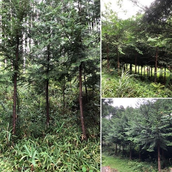 植林地も秋の気配_c0022913_16330218.jpg
