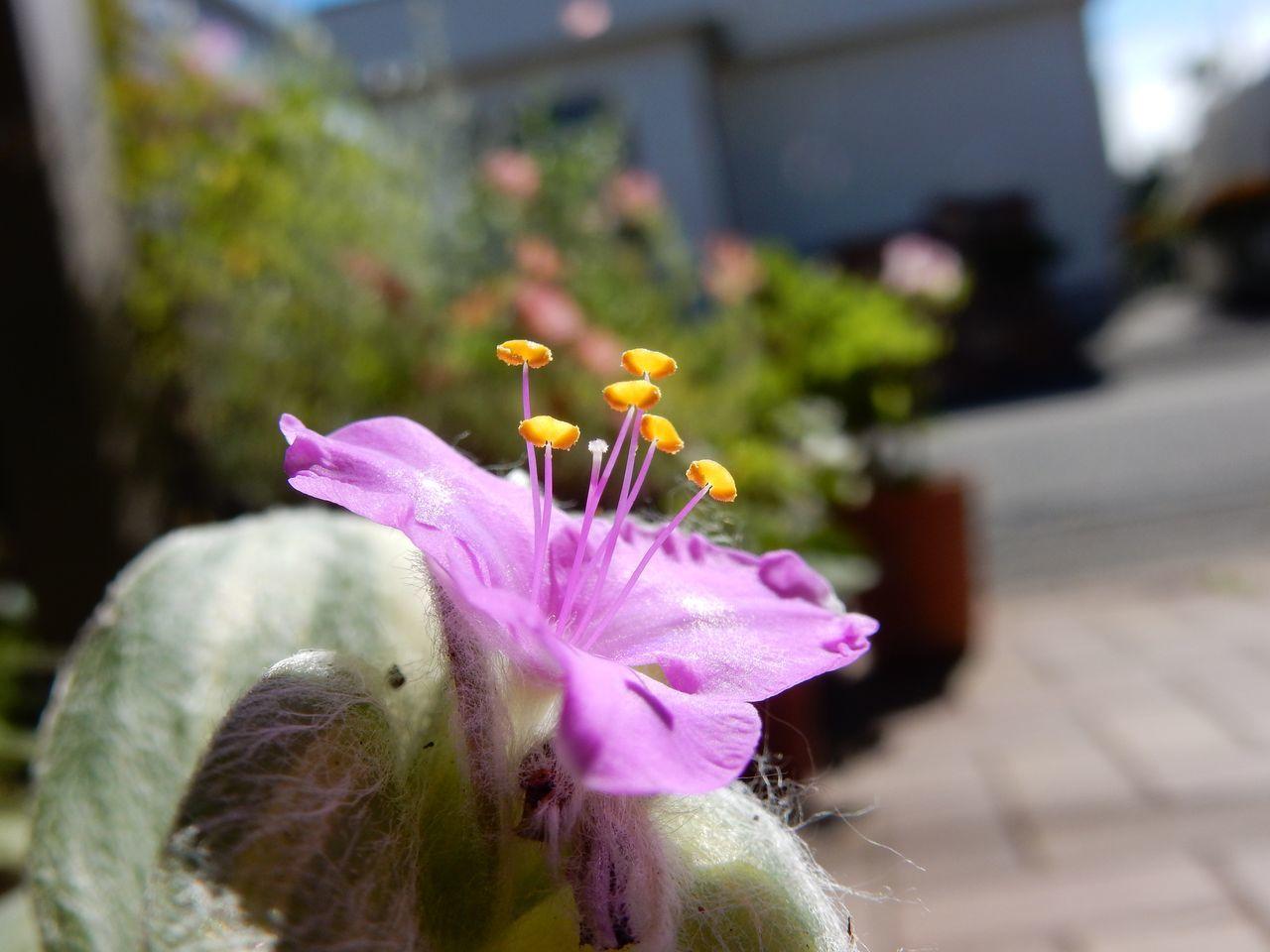 多くの植物は水に挿しておくだけで根が出てくる_c0025115_23242877.jpg