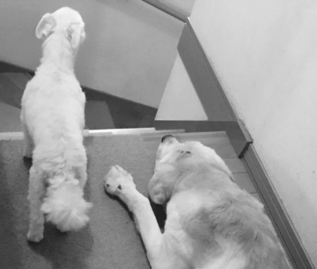 20days    4人+犬×2の生活_a0165160_16205660.jpg