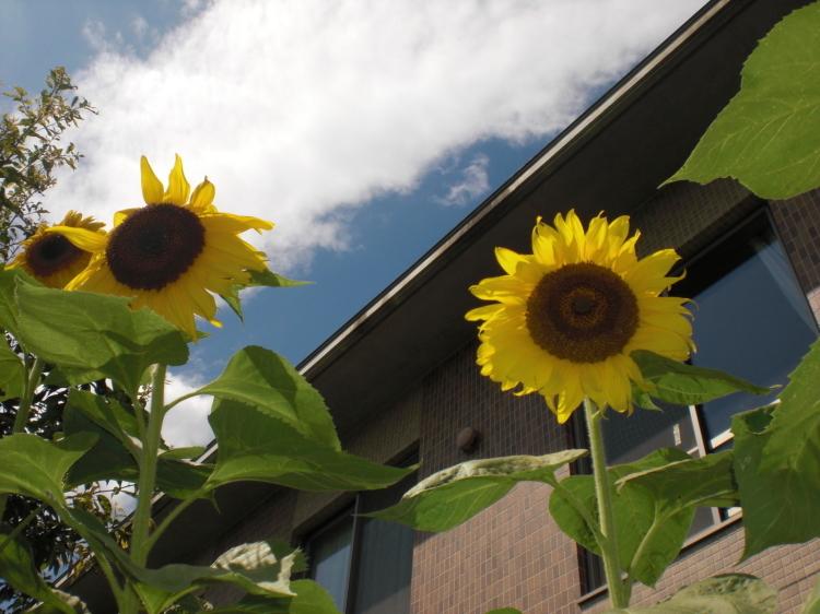 夏の風物詩_e0191174_13435579.jpg
