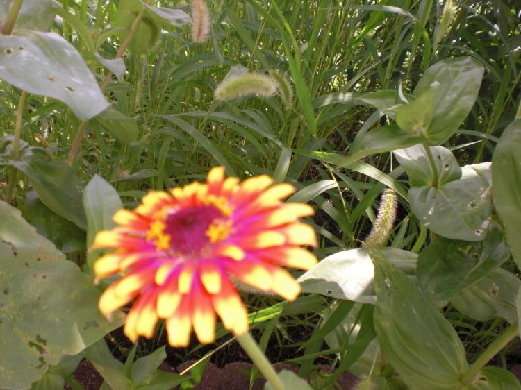 夏の風物詩_e0191174_13441866.jpg