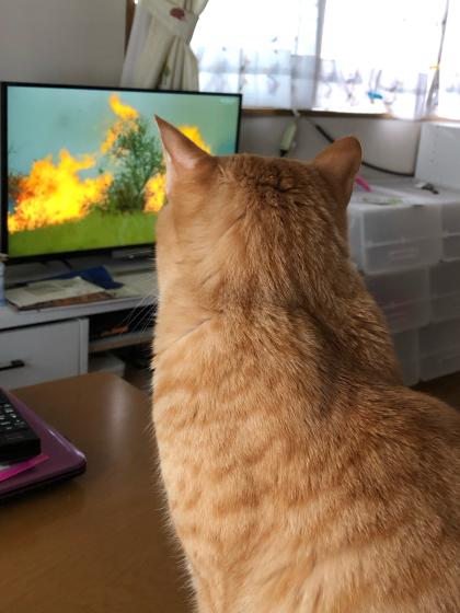大自然の厳しさを学ぶ。テレビで(;´∀`)_e0355177_14530566.jpg