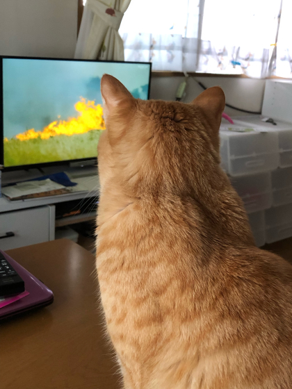 大自然の厳しさを学ぶ。テレビで(;´∀`)_e0355177_14530657.jpg