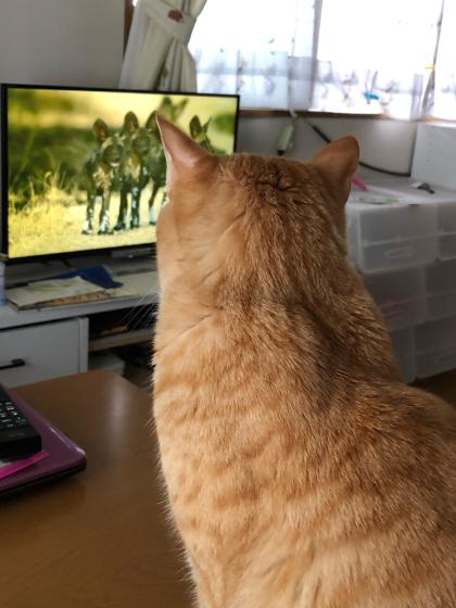 大自然の厳しさを学ぶ。テレビで(;´∀`)_e0355177_14530774.jpg