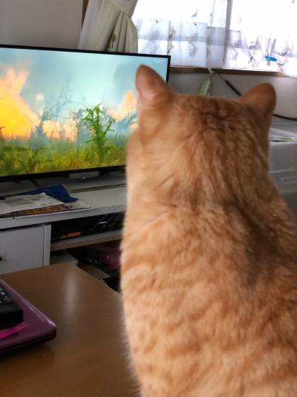 大自然の厳しさを学ぶ。テレビで(;´∀`)_e0355177_14550746.jpg
