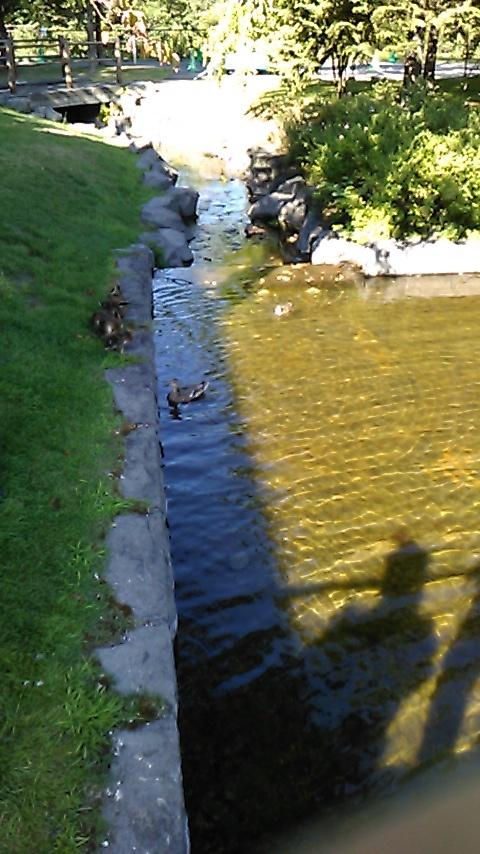札幌芸術の森の鴨!_d0261282_23562109.jpg