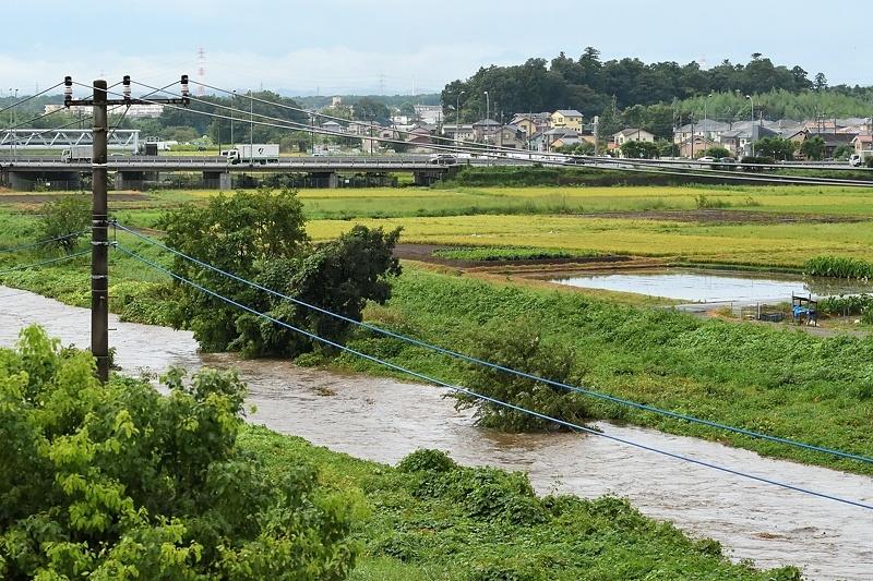 小畔川便り(台風・雷雨・伐採:2019/9/9-12)_f0031682_09430575.jpg