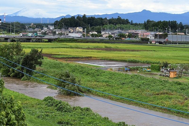 小畔川便り(台風・雷雨・伐採:2019/9/9-12)_f0031682_09430605.jpg
