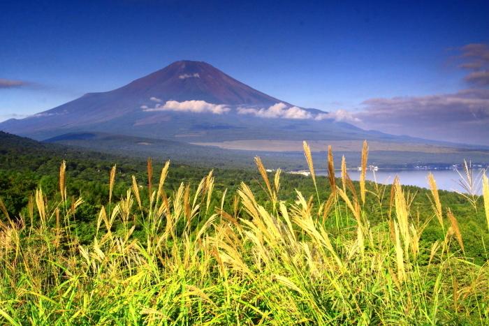 令和元年9月の富士(19)パノラマ台のススキと富士_e0344396_18464351.jpg