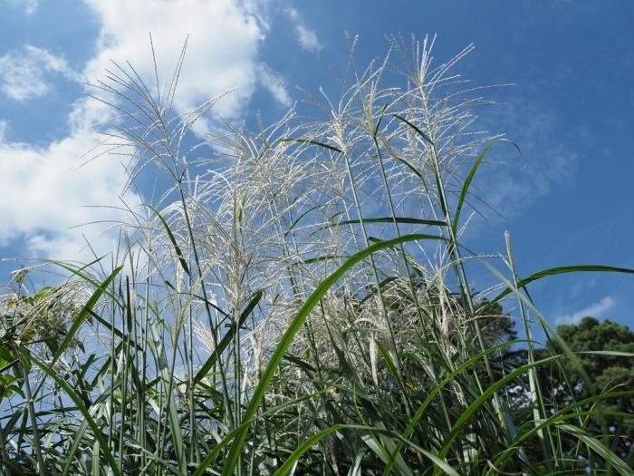フライング?小石川植物園その3 課題_f0224100_23461937.jpg