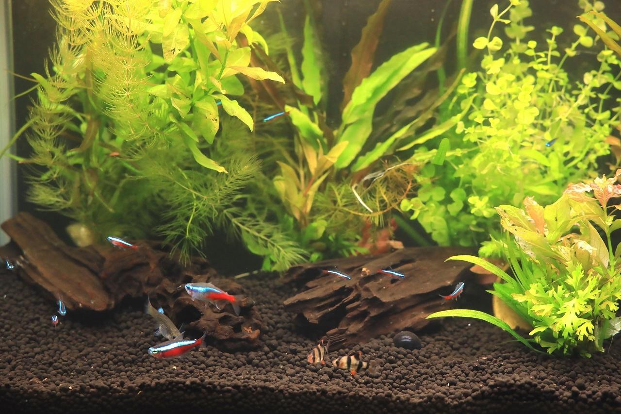 8種類の熱帯魚が泳いでます~_a0188405_21065637.jpg