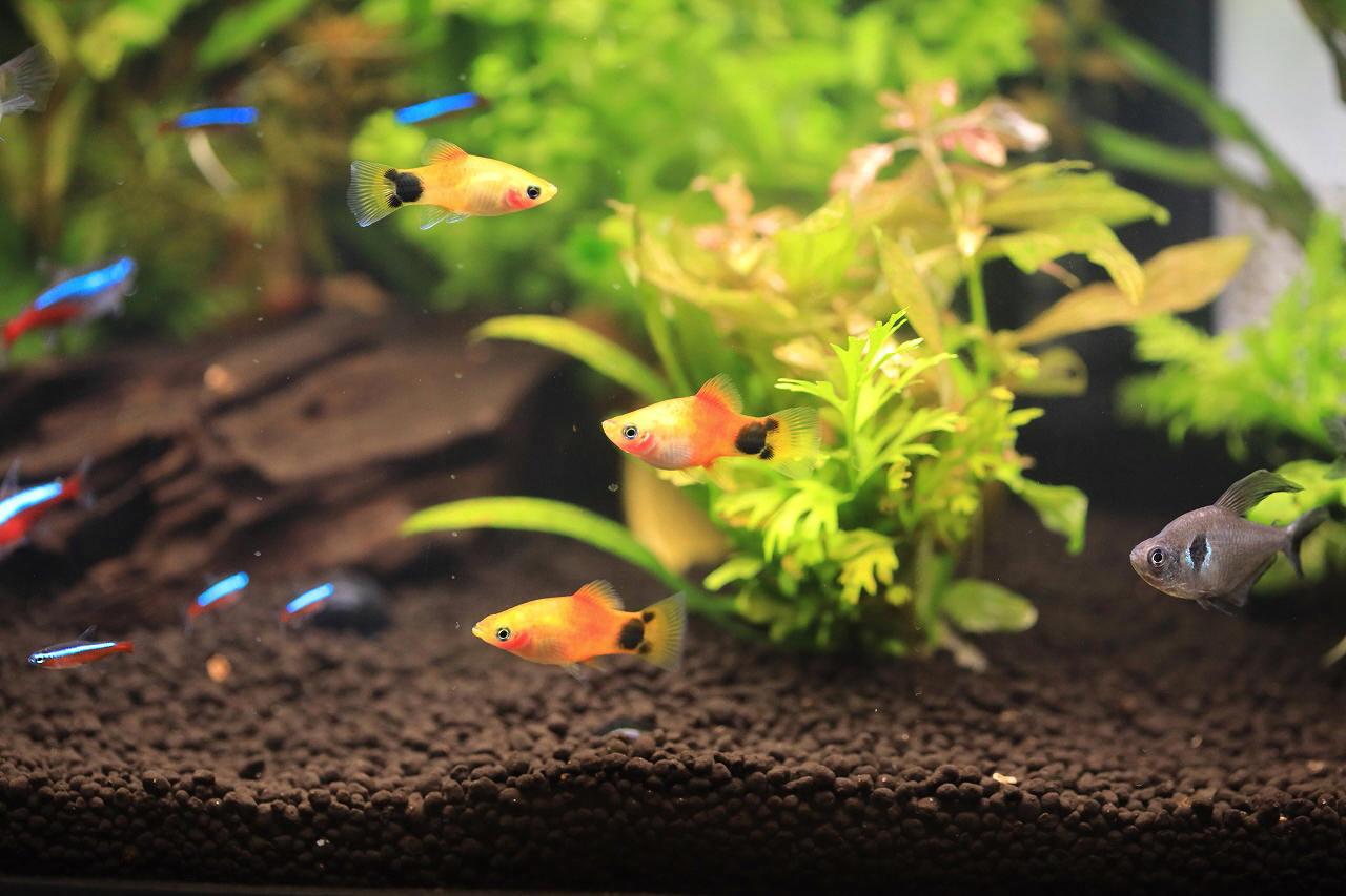 8種類の熱帯魚が泳いでます~_a0188405_21085294.jpg