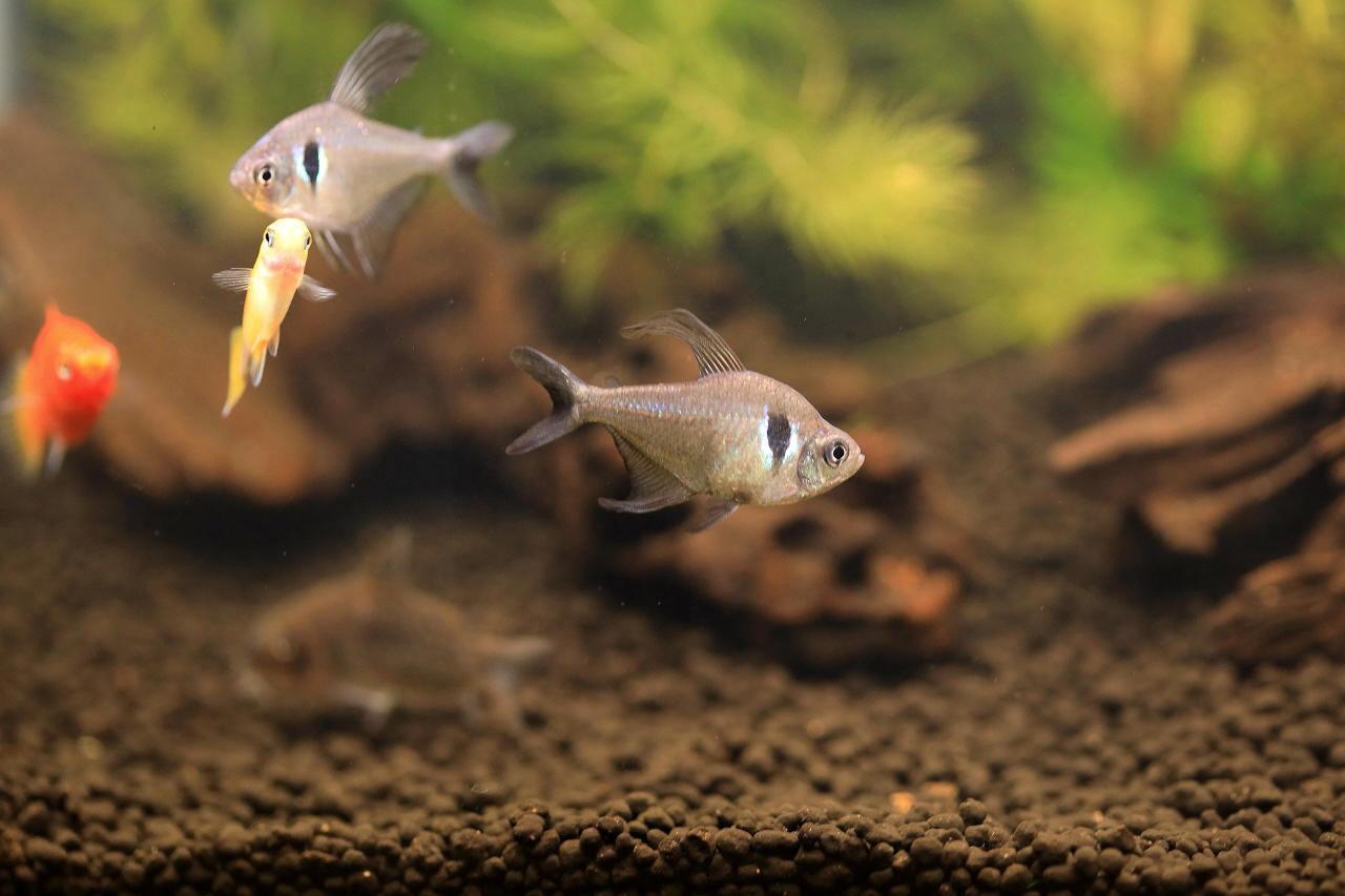 8種類の熱帯魚が泳いでます~_a0188405_21091648.jpg