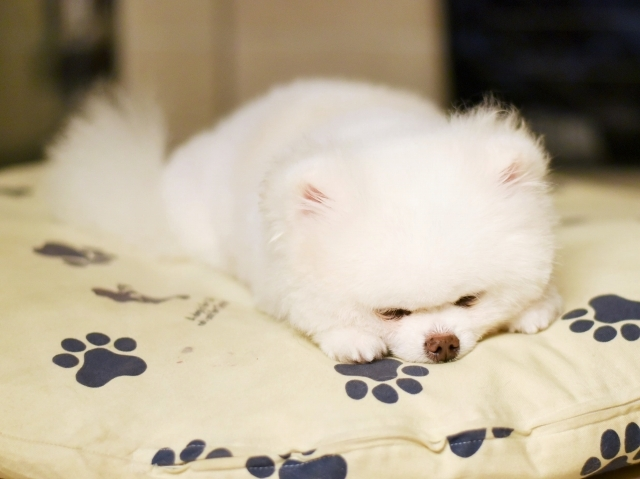 おやすみなさい、いい夢を_d0360206_00462034.jpg