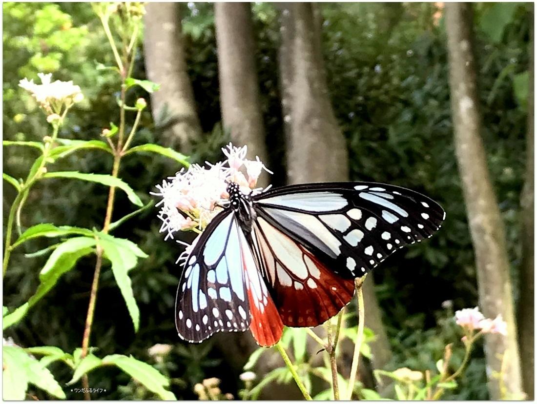 * 神秘の渡り蝶 *_d0317115_20583299.jpg