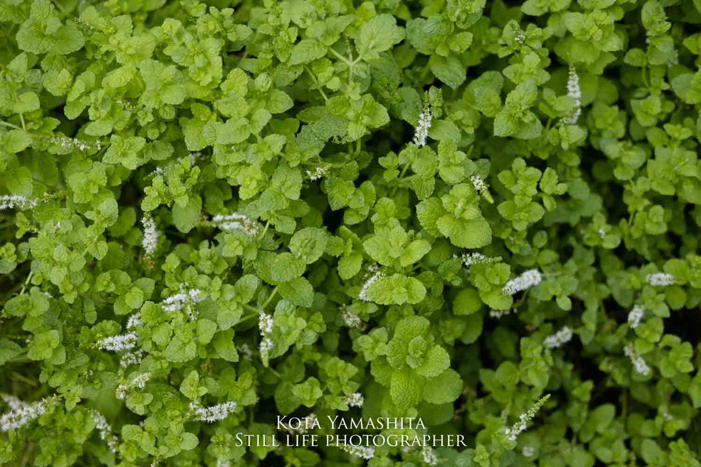 庭へ_a0161527_17403121.jpg