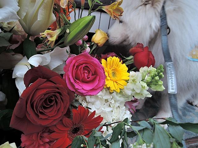 お花のクローカ_c0062832_13294191.jpg