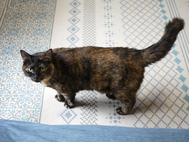 猫のお留守番 ぴーこちゃん編。_a0143140_21333313.jpg