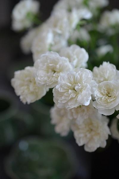 白い花のコンポジション_e0366442_15532733.jpg