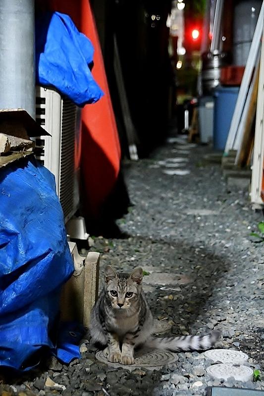 盛岡三昧の旅⑥ 野良猫とジャジャ麺_b0314043_10215829.jpg