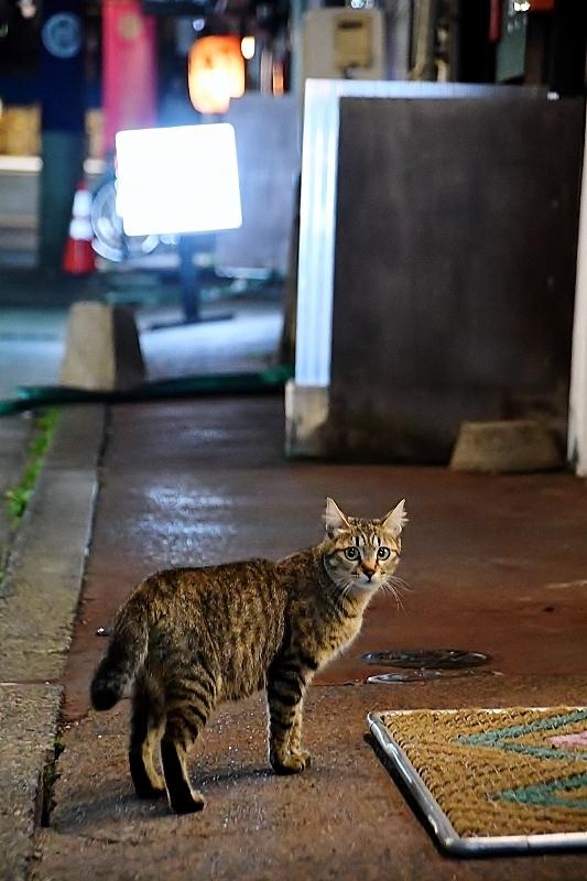 盛岡三昧の旅⑥ 野良猫とジャジャ麺_b0314043_10221636.jpg