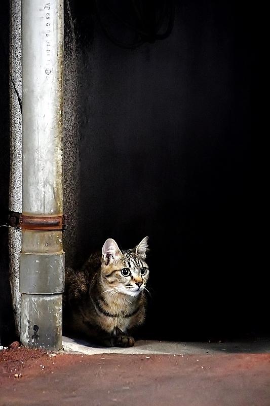 盛岡三昧の旅⑥ 野良猫とジャジャ麺_b0314043_10223227.jpg