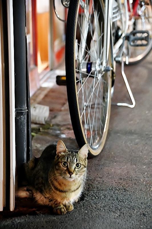 盛岡三昧の旅⑥ 野良猫とジャジャ麺_b0314043_10230318.jpg