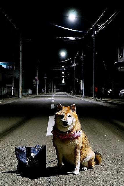 盛岡三昧の旅⑥ 野良猫とジャジャ麺_b0314043_10302384.jpg
