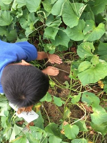 草木染めと大根の種まきをしました!!_f0079749_17435200.jpg