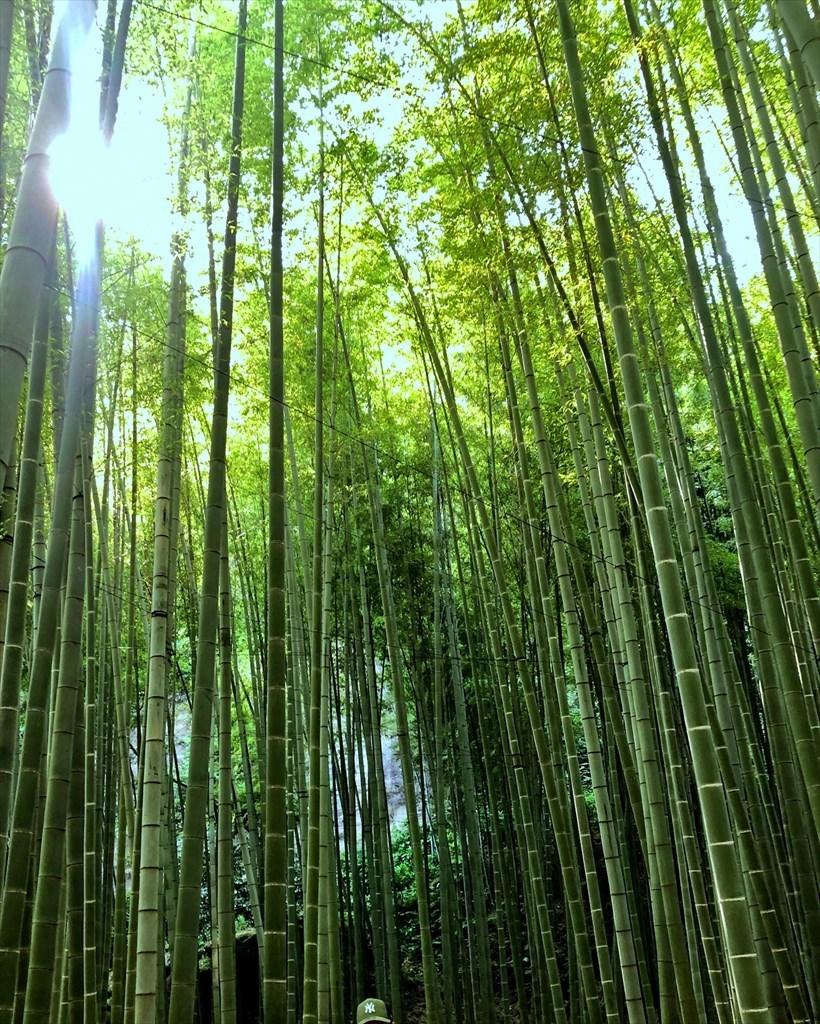 大人の鎌倉散策 2019_a0092659_22215114.jpg