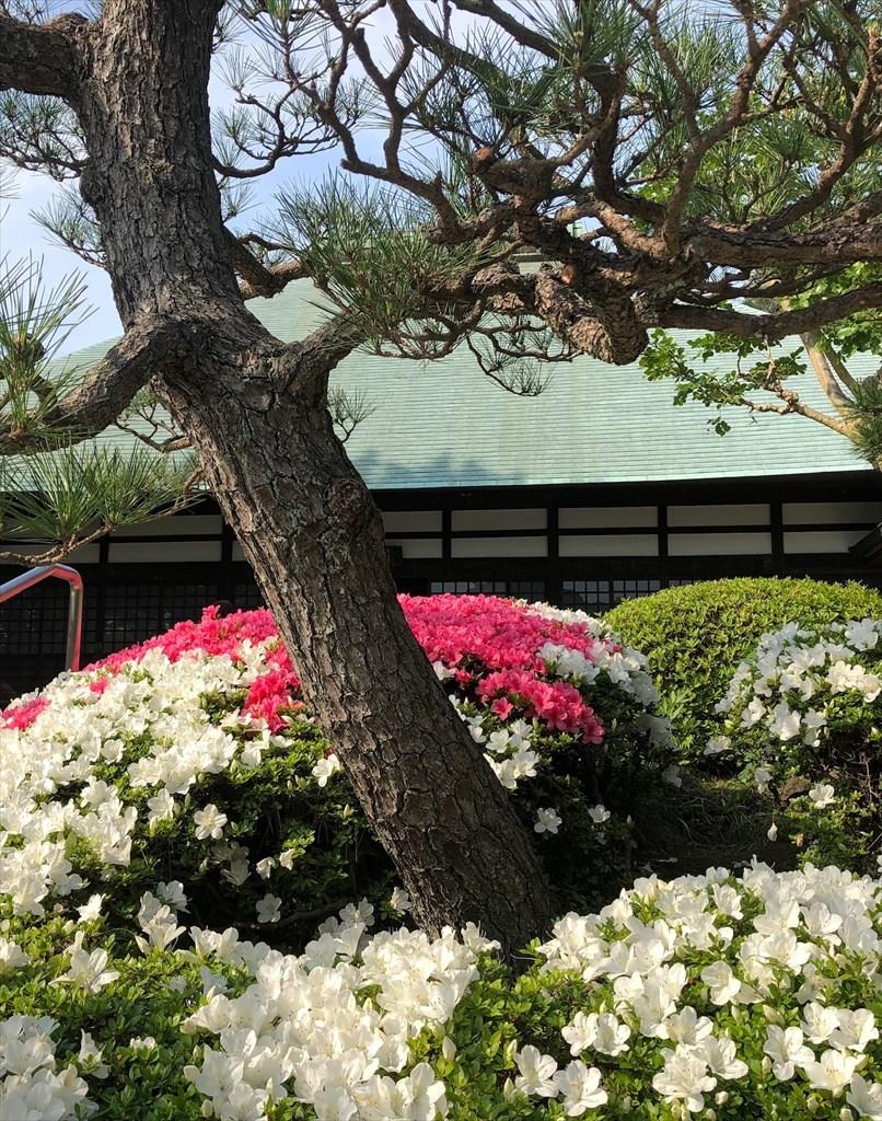 大人の鎌倉散策 2019_a0092659_22401061.jpg