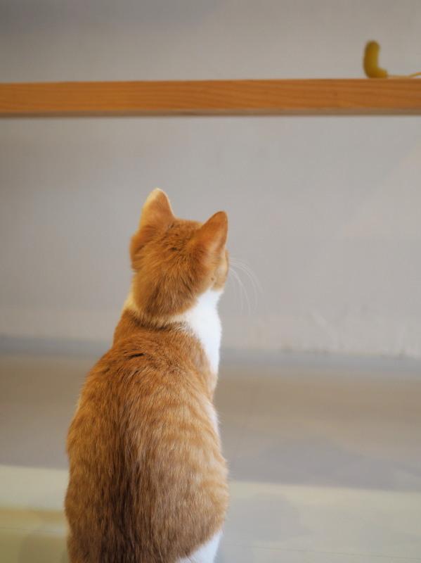 Blue Cat Cafe_c0254479_21595062.jpg