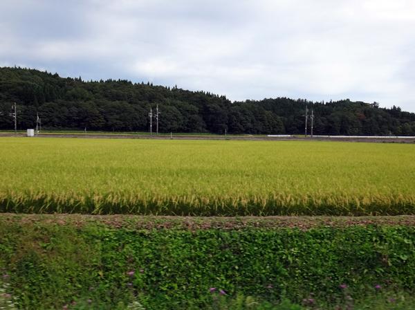 秋色の田んぼ、蕎麦畑、青森駅前干潟など_a0136293_15481557.jpg