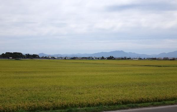 秋色の田んぼ、蕎麦畑、青森駅前干潟など_a0136293_15494415.jpg
