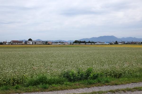 秋色の田んぼ、蕎麦畑、青森駅前干潟など_a0136293_15545929.jpg