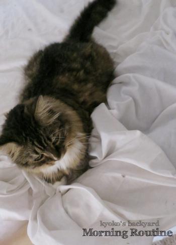 Baileyの朝のルーチン_b0253205_14061912.jpg