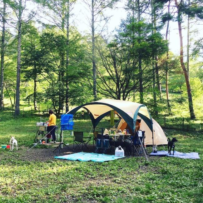 2019年8月9日 八ヶ岳 その1(富士見高原キャンプ場)_b0090517_11463814.jpg