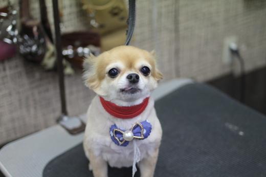 9月19日ご来店のワンちゃんです!!_b0130018_09214353.jpg