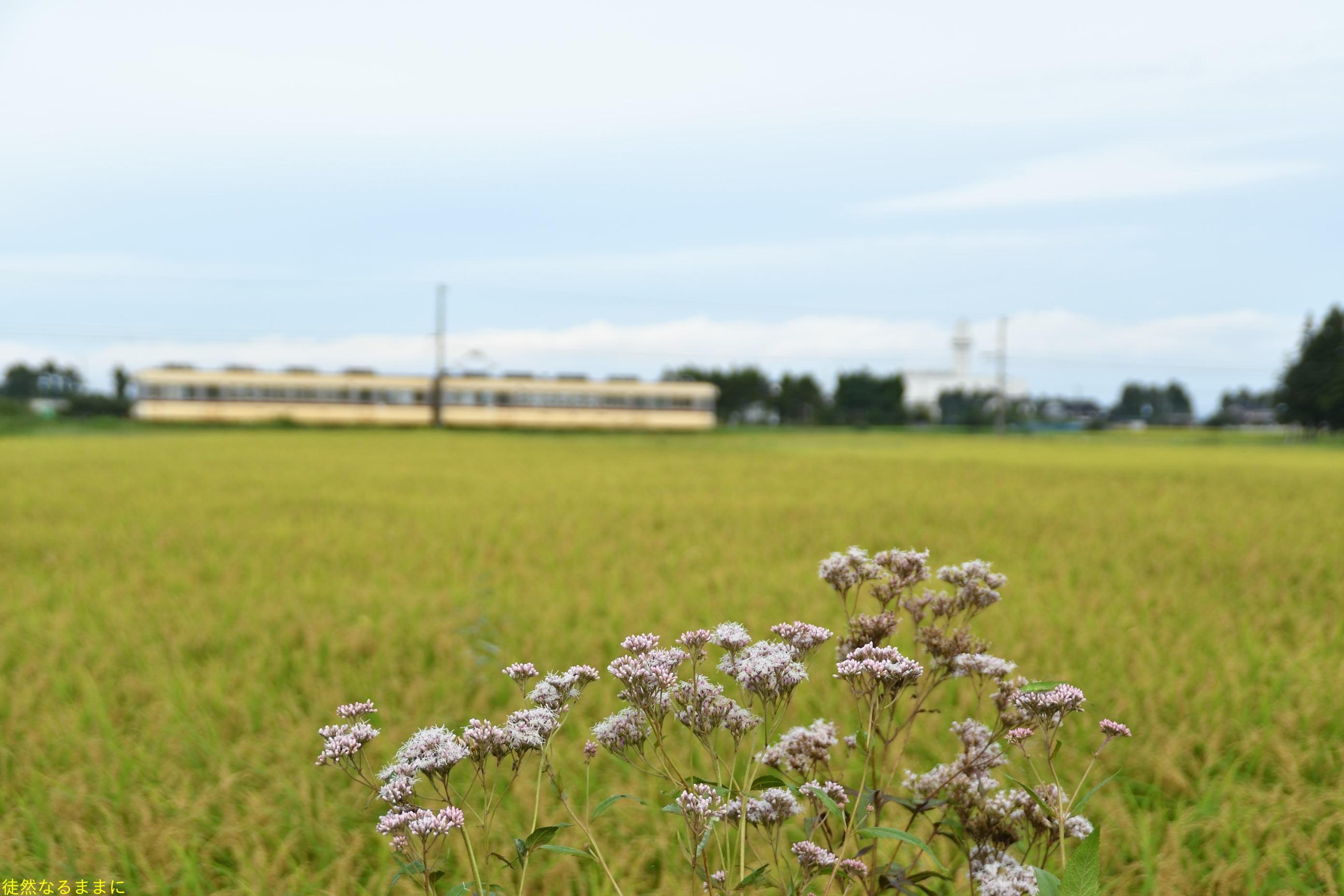 富山地方鉄道  立山線_d0285540_07112999.jpg