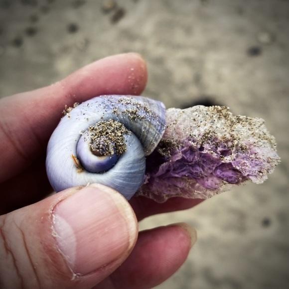 青い貝がたくさん‼これって大量漂着?~9/22 伊勢 国府の浜_c0312349_14390624.jpeg