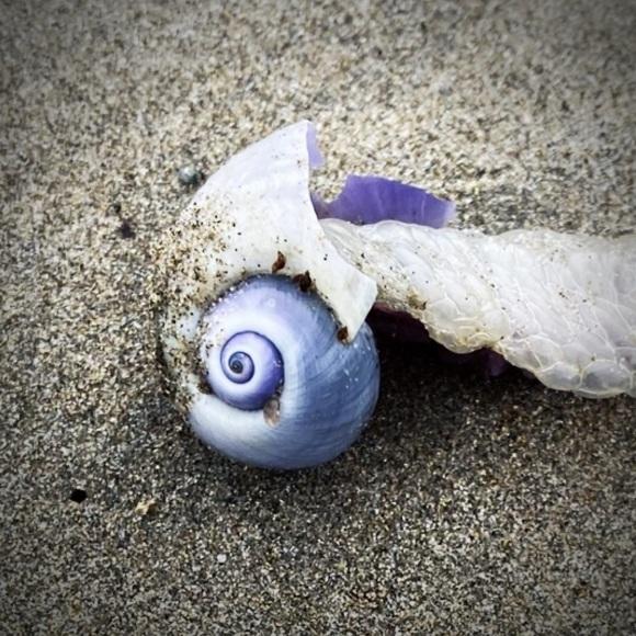 青い貝がたくさん‼これって大量漂着?~9/22 伊勢 国府の浜_c0312349_14394050.jpeg
