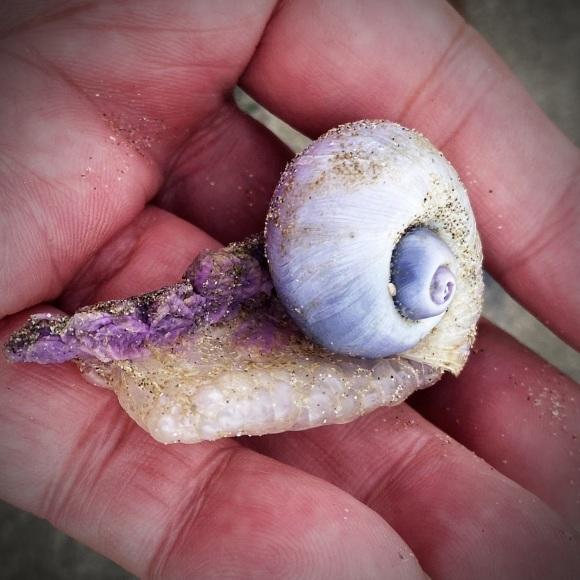 青い貝がたくさん‼これって大量漂着?~9/22 伊勢 国府の浜_c0312349_14402258.jpeg