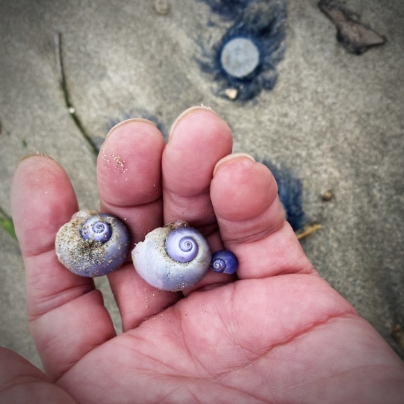 青い貝がたくさん‼これって大量漂着?~9/22 伊勢 国府の浜_c0312349_18273323.jpeg