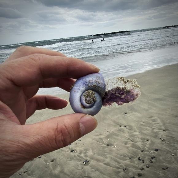 青い貝がたくさん‼これって大量漂着?~9/22 伊勢 国府の浜_c0312349_21492130.jpeg