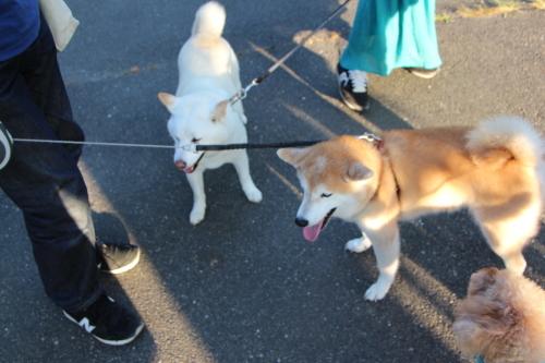 """今日は""""犬""""の日_f0245650_06331466.jpg"""