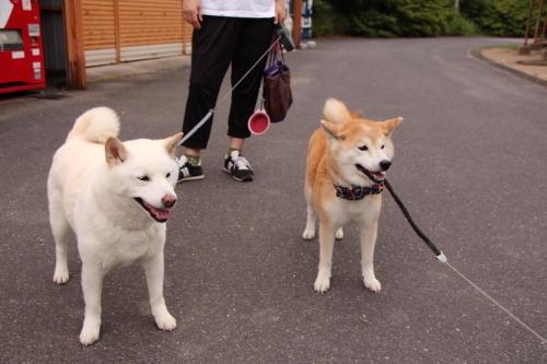 """今日は""""犬""""の日_f0245650_06341503.jpg"""